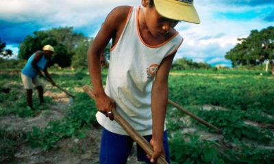 Banco Mundial/Scott Wallace Un joven trabajando en una zona rural del noreste de Brasil.