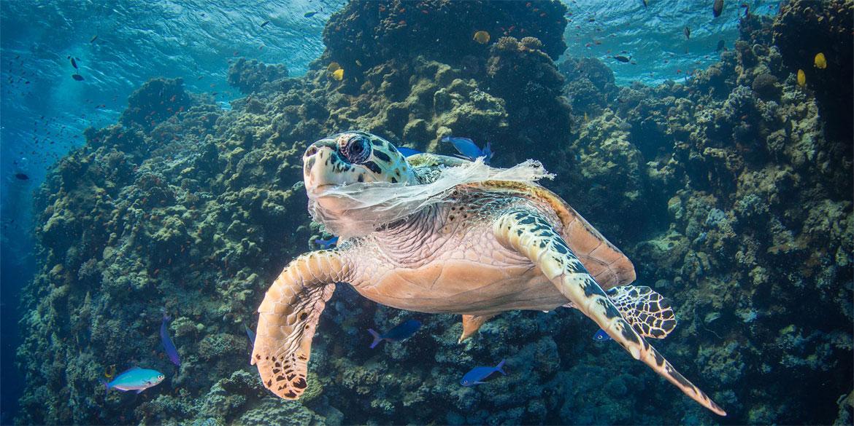 Saeed Rashid La polución por plástico en los océanos es fatal para la vida marina.