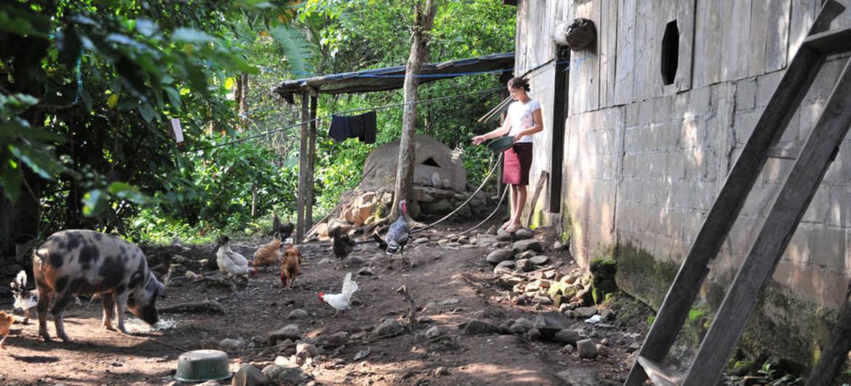 Foto de archivo: FAO Una agricultora alimenta a sus animales en una granja familiar en Nicaragua