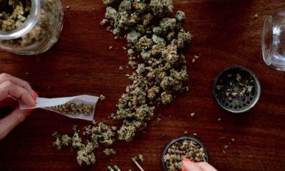 La potencia del cannabis se ha cuadruplicado en los últimos 24 años.
