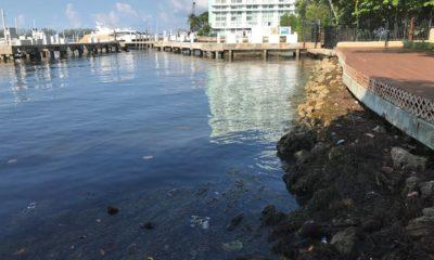 """Fotografía a las orillas de la Bahía Vizcaína, en la que se aprecia la contaminación por plásticos y algas tóxicas, hoy en Miami (EE. UU). La Bahía Vizcaína (Biscayne Bay), un tesoro ecológico ubicado en el condado de Miami-Dade (Florida, EE.UU.), se encuentra en grave peligro por la contaminación de sus aguas, rodeada de amenazas sobre las que científicos y cineastas de Miami alertan ahora a la población y las autoridades. Concienciar sobre el peligro es el fin de los vídeos ganadores de un concurso que pone en valor la maravilla de este entorno marino con la implicación de dos científicas y una """"sirena"""" que vive en la bahía. EFE/ Ana Mengotti"""